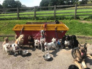 Dogs tied up to Lostock Skip