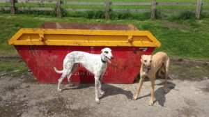 2 dogs with a Lostock Skip